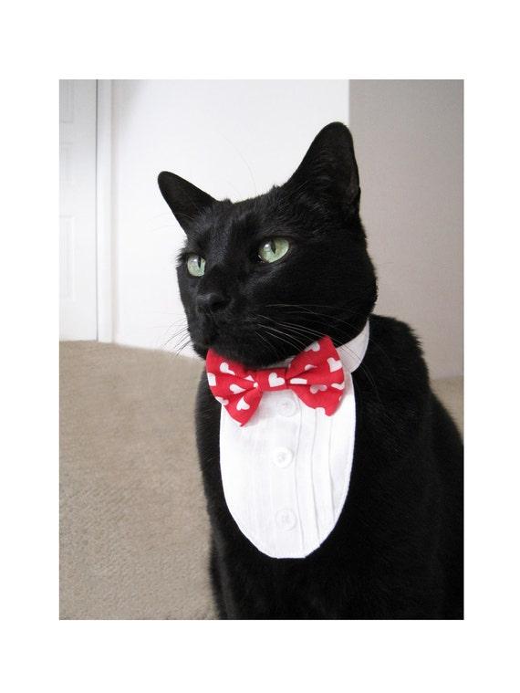 Cat Tuxedo - My Funny Valentine