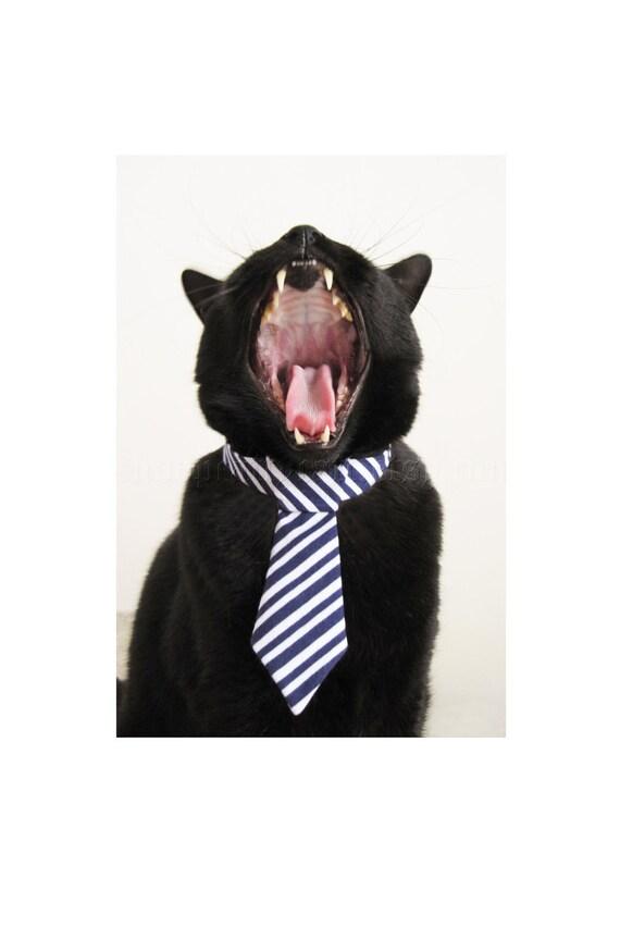 Cat Tie - Big Daddy