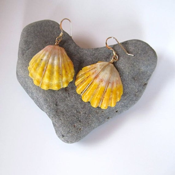 RESERVED Hawaiian Sunrise Shell Earrings, Rare, Hawaiian Shell Jewelry, Gold Wire Wrapped