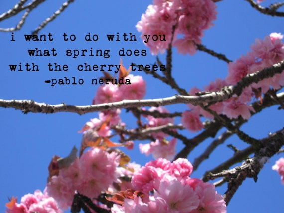 Items Similar To Cherry Blossom Photo With Pablo Neruda