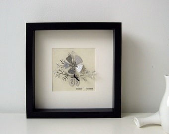 Cosmea (spotted) Botanical Illustration in Stainless Steel