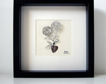 double rose botanical illustration in stainless steel