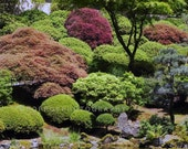 Japanese Garden Fine Art Photograph 8x10 Home Decor Green Emerald Wine Nature Gift for Her Him House Warming