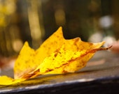 Autumn Yellow Golden Leaf Macro Bokeh Photograph Nature Home Decor Natural Gift Idea for Him Gift Idea for Her 8x10