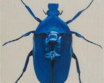 Blue Beetle mixed media mini painting