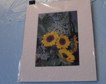 Three Sunflowers, photograph, matted, 5x7