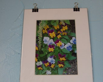 Photograph, Violas, matted, ready to frame.