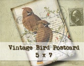 Vintage Birds Postcard 5 x 7 - Digital Download - wall decor greeting card altered art vintage nature