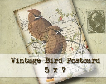 Vintage Birds Postcard 5 x 7 - Digital Download - wall decor greeting card altered art vintage nature