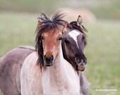 Summer  Play - Fine Art Wild Horse Photograph - WildHoofbeats