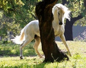 The Stallion and the Tree - Fine Art Horse Photograph - Horse - Lusitano - Fine Art Print