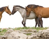 Wild Horse Greeting - Fine Art Wild Horse Photograph - Wild Horse - Fine Art Print