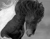 Wild Head Shake - Fine Art Horse Photograph