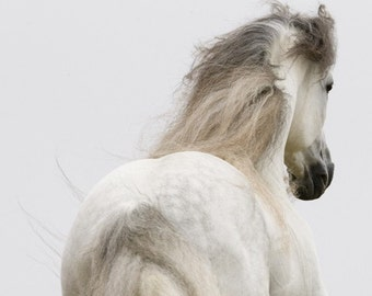 Sunrise Run - Fine Art Horse Photograph - Horse - Andalusian - Fine Art Print