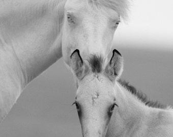 Brothers - Fine Art Wild Horse Photograph - Wild Horse - Black and White - Cremello Colt