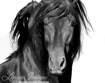 El Caballo Negro - Fine Art Horse Photography - Horse - Black and White - Fine Art Print