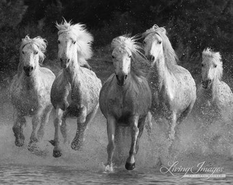 Water Run - Fine Art Horse Photograph - Horse - Camargue - Horse Photograph - Black and White - Fine Art Print