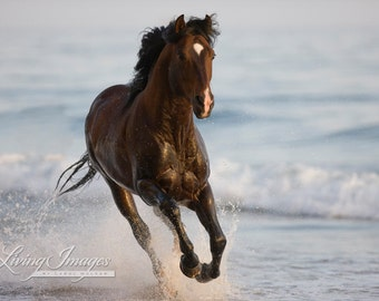 Stallion in the Surf - Fine Art Horse Photograph - Horse - Horse Art - Andalusian- Ocean - Fine Art Print