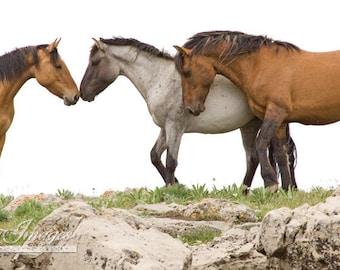 Wild Horse Greeting - Fine Art Wild Horse Photograph - Wild Horse - Fine Art Print - Pryor Miuntains - Shaman