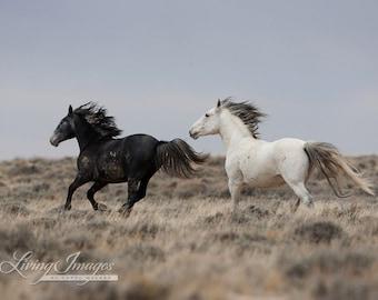 Running Into the Storm - Fine Art Wild Horse Photograph - Wild Horse - Adobe Town - Fine Art Print