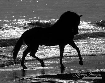 Beach Silhouette - Fine Art Horse Photograph - Horse - Black and White - Horse Art