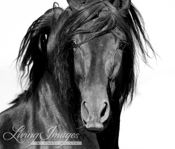 El Caballo Negro - Fine Art Horse Photography - Horse - Black and White