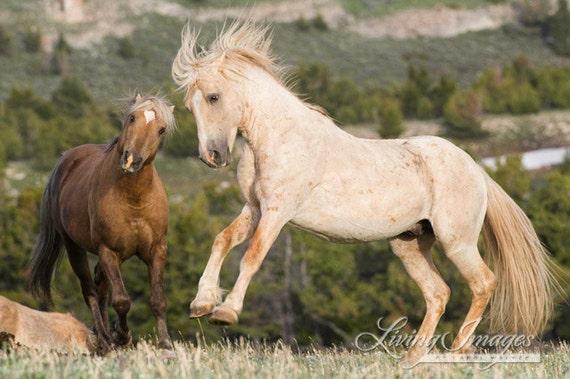 The Challenge: Bolder and Cloud - Fine Art Wild Horse Photograph - Wild Horse - Cloud