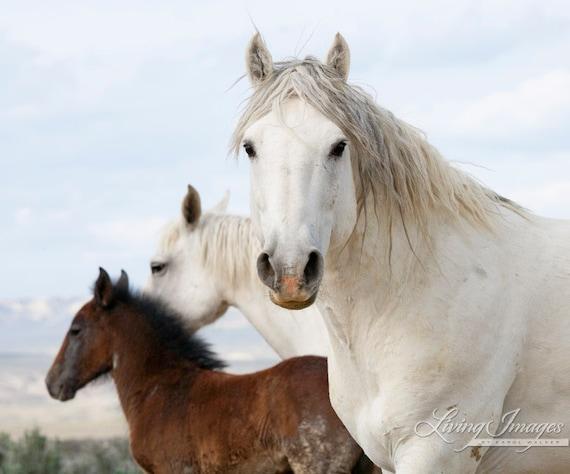 Wild Horse Family - Fine Art Wild Horse Photograph - Wild Horse - Adobe Town - Fine Art Print