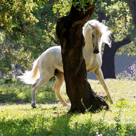 The Stallion and the Tree Fine Art Horse Photograph