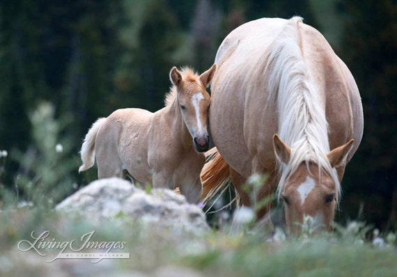 Palomino Mare and Foal - Fine Art Horse Photograph - Wild Horse - Cloud - Pryor Mountains