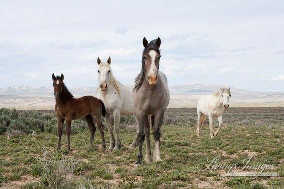Adobe Town Family Stands - Fine Art Wild Horse Photograph - Wild Horse - Adobe Town