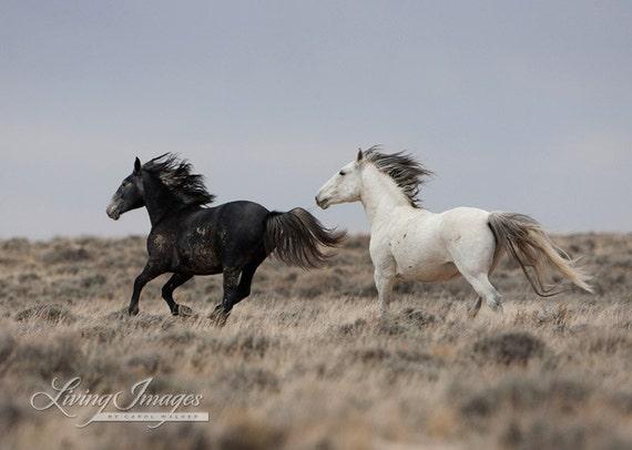 Running Into the Storm - Fine Art Wild Horse Photograph - Wild Horse - Adobe Town