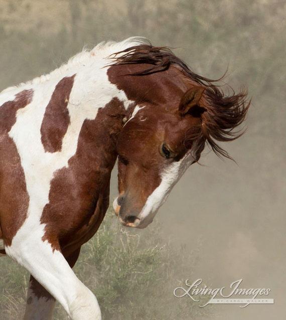 Apache's Portrait - Fine Art Wild Horse Photograph - Wild Horse - Apache - Sand Wash Basin - Fine Art Print