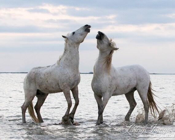 Duet at Dawn - Fine Art Horse Photograph - Horse - Camargue - Fine Art Print