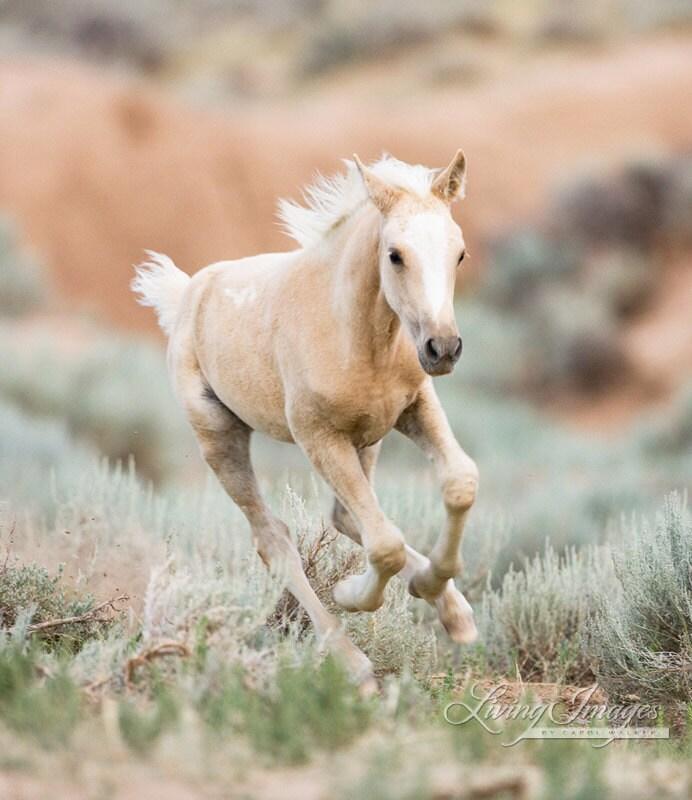 palomino foal - photo #3