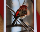 Purple Finch - Photographic Greeting Card - Blank Inside
