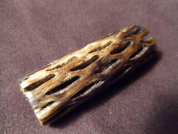 Dread Lock Bead- Cholla Catctus- Organic- 2.35 inches or  5.96 cm long- Love Your Locks-30