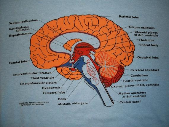 vintage Brain t Shirt XL light Blue 50/50 Screen Stars Medical terms