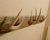 Whitetail Deer Coat or Towel  Rack
