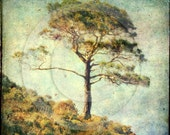 DAYDREAM WEAVER - I fancy a nap under this lone pine... Fine Art Photographic Print 10x10.