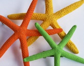Starfish Hair Pins SALE - Orange, Green, Yellow