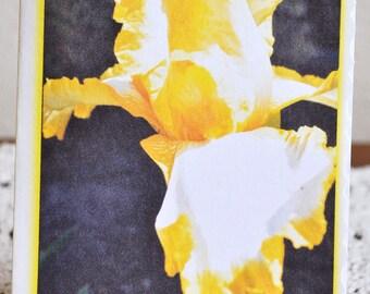 Yellow & White Iris Easter Card