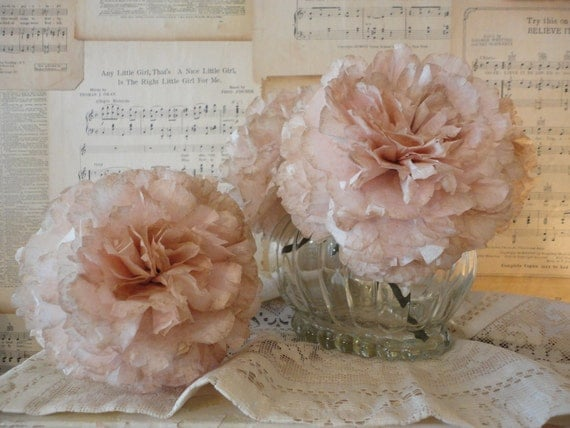 Pale Blush Peonys Peonies with Wilted edges