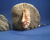 Spine Pendant - Hand Carved Palm Beach Sea Shell
