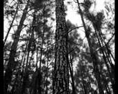 "10""x30"" Black & White Landscape Art Print (glossy paper)"