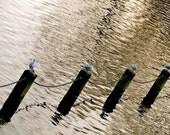 Serpentine Birds, London, color photo