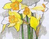 Daffodils Print A4