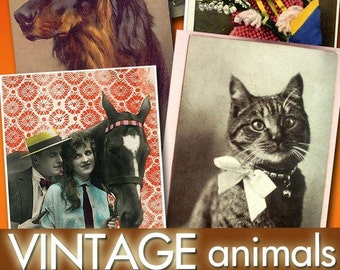 collection of digital images 780 vintage animals -Part.1- cat dog horse for your cards labels jewellery decoupage photo greeting / C115