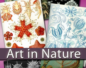 Digital collection Art in Nature by Ernst Haeckel - zoology biology cards labels decoupage birds fish old book greeting card / C165