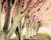 SALE 5x7 Spring Trees in Bloom Antique Look Photograph